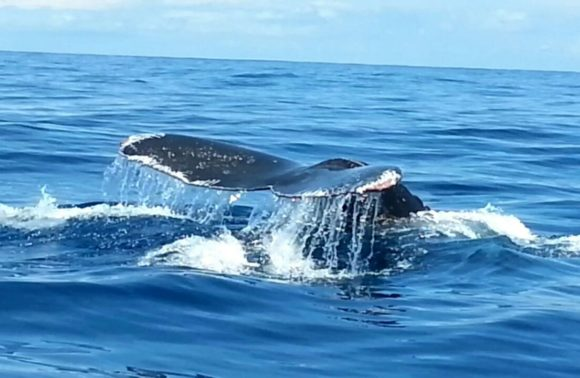 Whale and Dolphin watching tour half day– San Josecito Beach