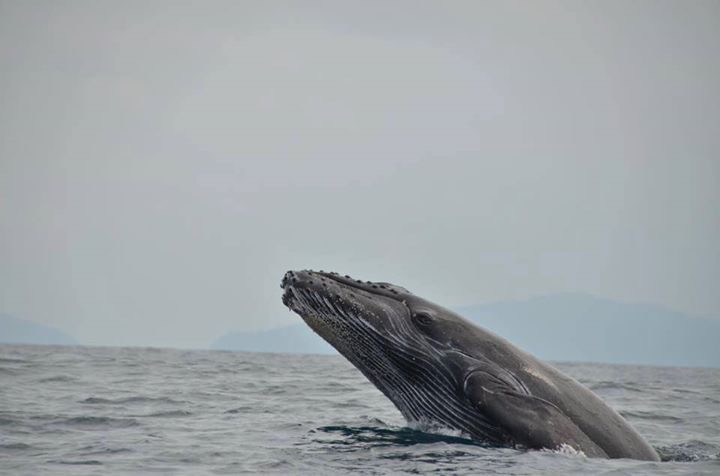 Whale and Dolphin Watching tour half day & Caño Island