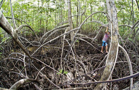 Mangrove Tour – Terraba-Sierpe Mangrove Forest