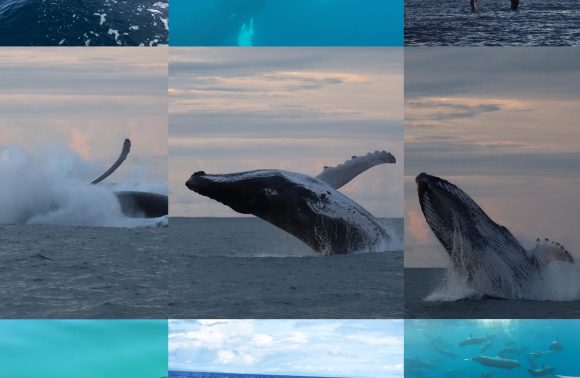 Whale and Dolphin Watching tour full day