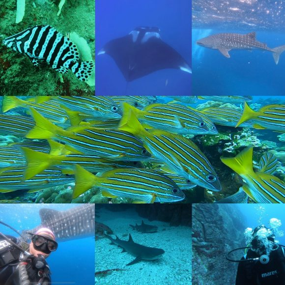 Diving Tour – Caño Island Biological Reserve